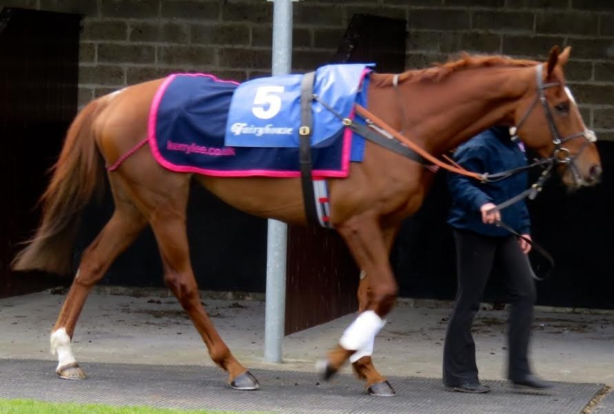 Top Gamble before the Normans Grove Chase (Gr2) at Fairyhouse